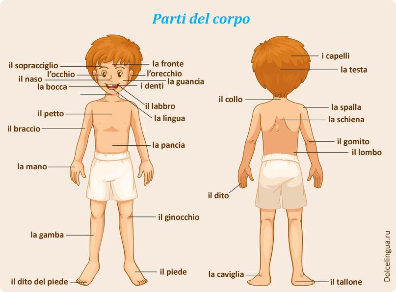 Описание внешности человека на итальянском